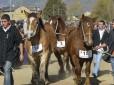 La feria del caballo de Puigcerda, activa el motor económico cerdà